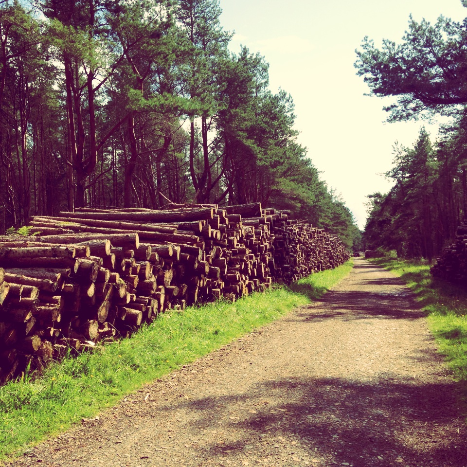 Tentsmuir Forest, Scotland, Cycling, National Cycle Network, Dundee,