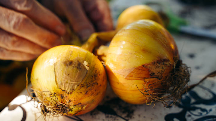 three home grown onions on a wooden table